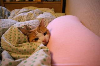 猫ブログ用 MAKI.jpg